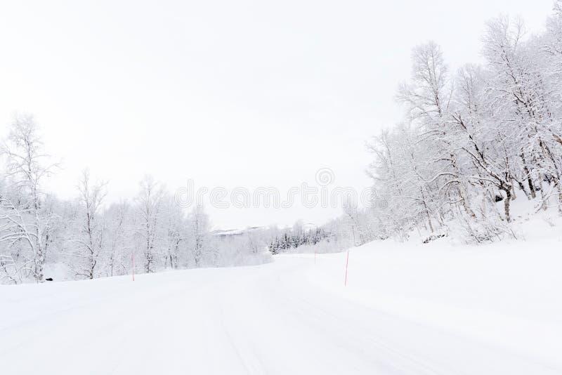 Arktyczna droga z snowcovered lasem fotografia royalty free