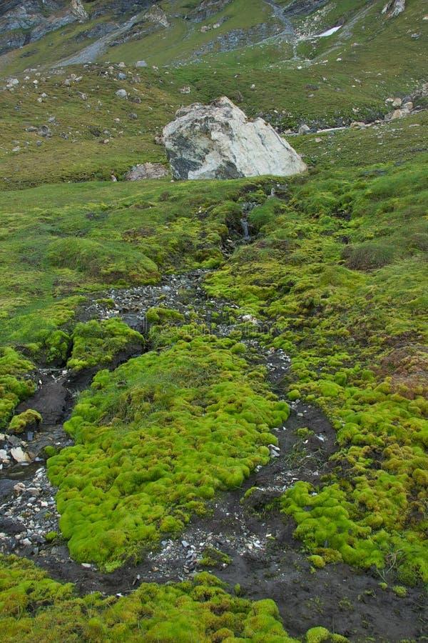 Arktyczna tundra przy Alkhornet, Svalbard obrazy stock