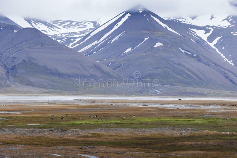 Arktyczna tundra w lecie, Svalbard, Norwegia obrazy stock