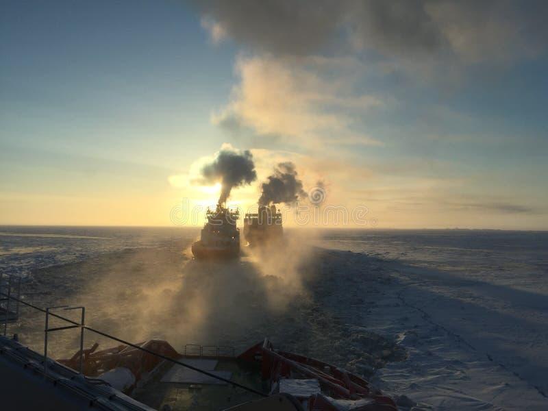 Arktyczny, obraz stock