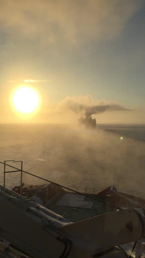 Arktyczny, obraz royalty free