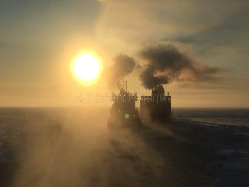 Arktyczny, obrazy royalty free