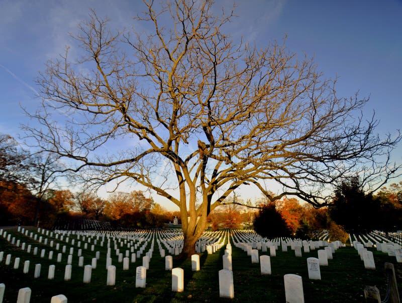 Arlington National Cemetary Scene royalty free stock image