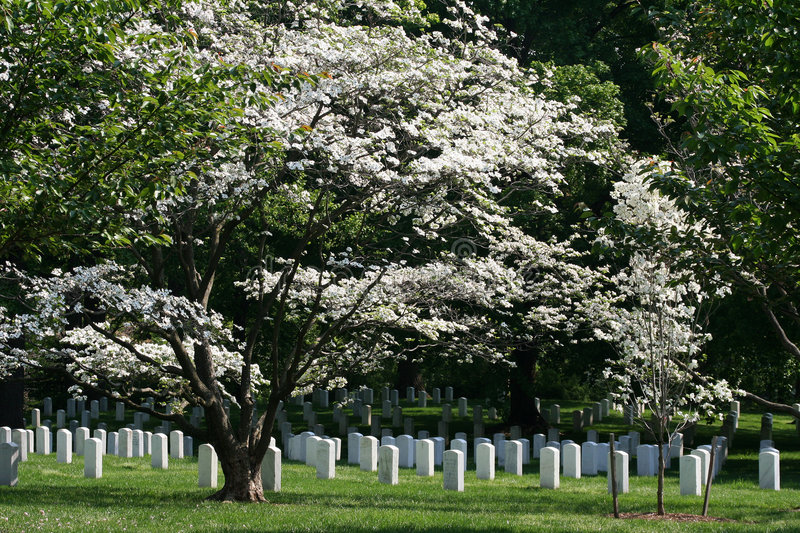 Download Arlington National Cemetery Stock Image - Image: 5097783