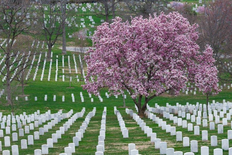 Arlington-nationaler Friedhof mit schönem Cherry Blossom und GR lizenzfreies stockbild