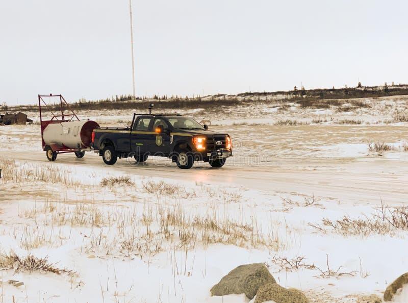 Armário Polar de Conservação imagem de stock royalty free