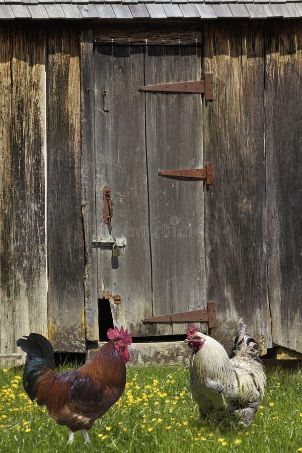 Arma a exploração agrícola do celeiro foto de stock