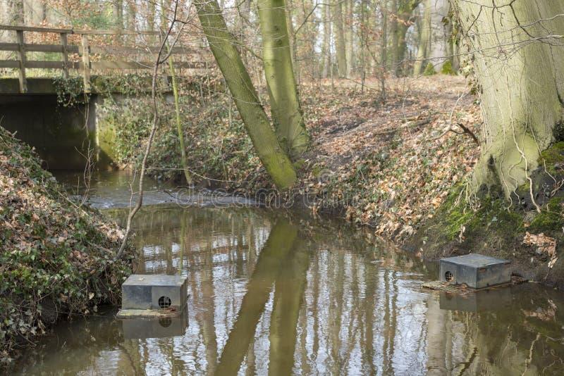Armadilha de flutuação do muskrat em um córrego nos Países Baixos imagens de stock