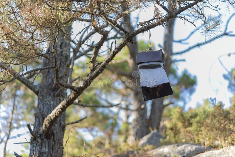 Armadilha do inseto em uma árvore fotografia de stock royalty free