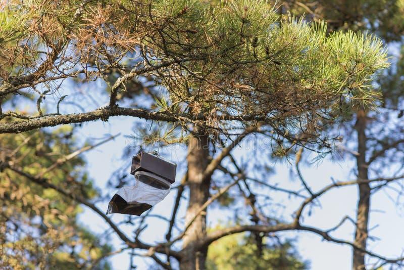 Armadilha do inseto em uma árvore foto de stock