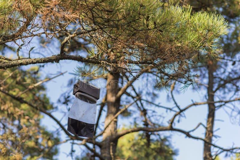 Armadilha do inseto em uma árvore imagens de stock