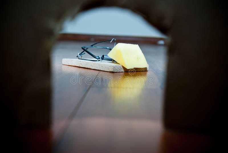 Armadilha do rato imagens de stock