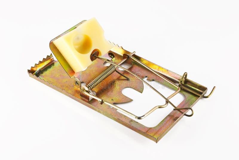 Armadilha e queijo fotografia de stock royalty free