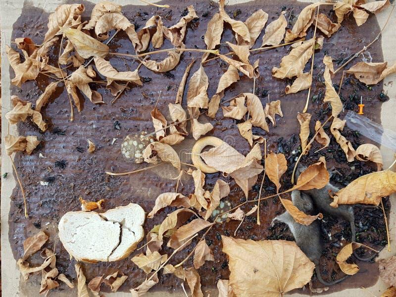 Armadilha para insetos e roedores imagem de stock royalty free