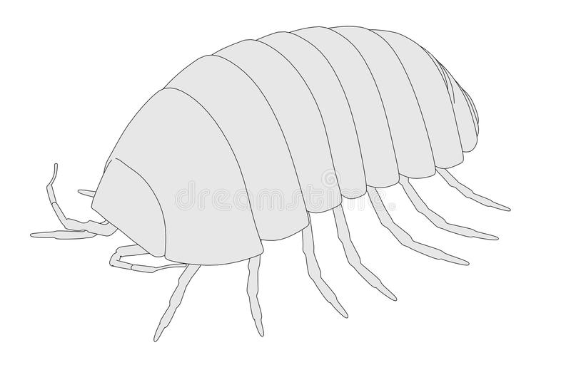 Armadillidium vulgare. Cartoon image of armadillidium vulgare vector illustration