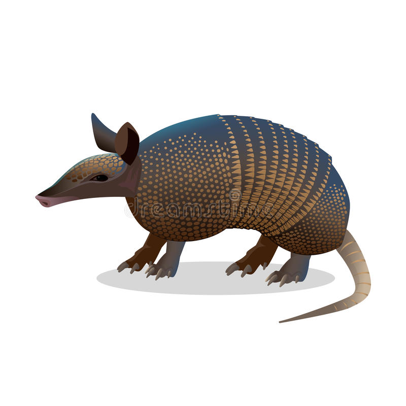Armadillo isolated. Realistic placental mammal with leathery armour shell. Armadillo isolated on white. Realistic placental mammal with leathery armour shell vector illustration