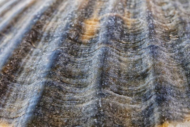 Armadura de la concha marina, similar a la superficie de un planeta deshabitado Fondo Macro Profundidad del campo baja foto de archivo