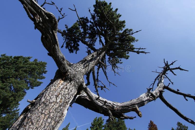 Armar av ett träd royaltyfri foto