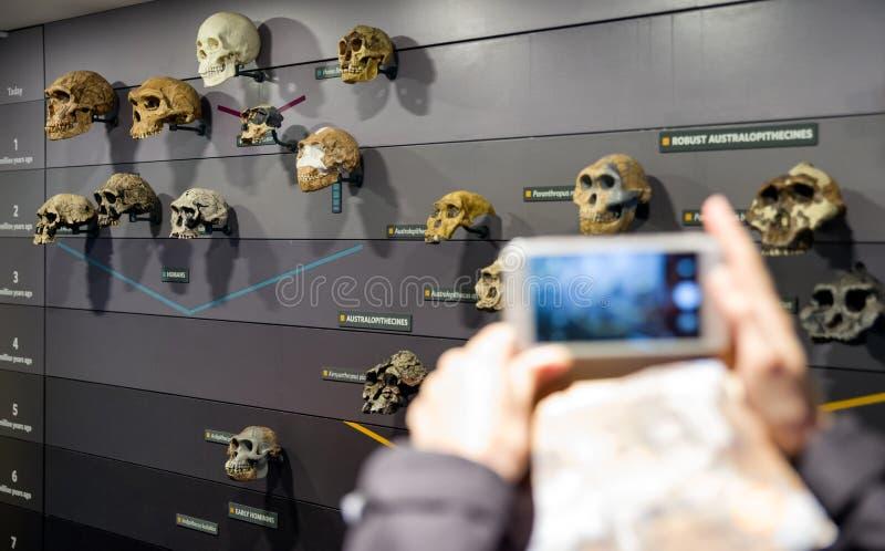 Armario con los cráneos humanos fotos de archivo