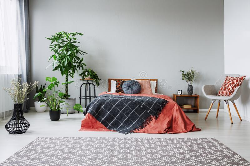 Armchair next to red bed with black blanket in bedroom interior with carpet and plants. Real photo royalty free stock images