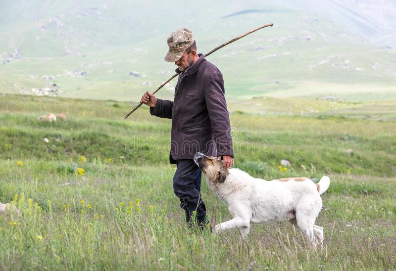 Armenian sheep herder with his dog. Tatev, Armenia - Jun 2, 2018: Old Armenian sheep herder with his trusty dog begging for pets on a grassy pasture on a sunny royalty free stock image
