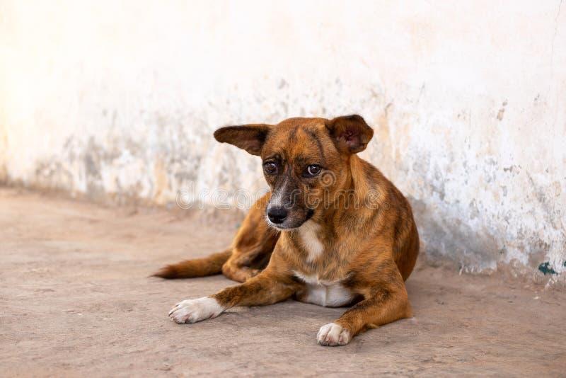 Armer und unglücklicher obdachloser Hund lizenzfreies stockfoto