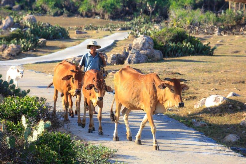 Armers und die Kühe lizenzfreie stockfotos
