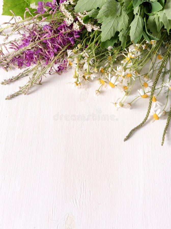 Armi di piante medicinali fresche sul tavolo fotografia stock