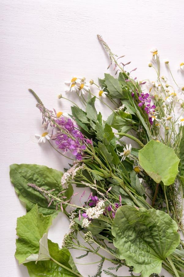 Armi di piante medicinali fresche sul tavolo fotografie stock