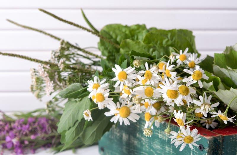 Armi di piante medicinali fresche in una scatola sul tavolo fotografie stock
