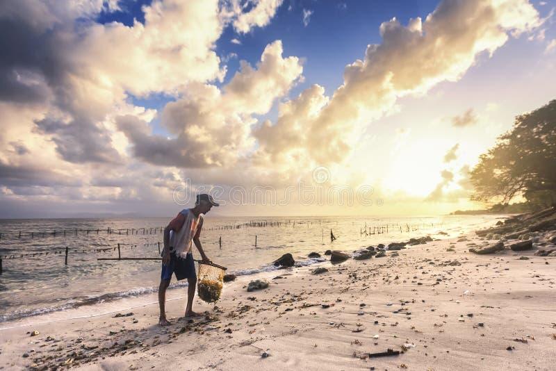 Armodkvinnan väljer upp havsväxt längs stranden i Bali, indonesia arkivfoton