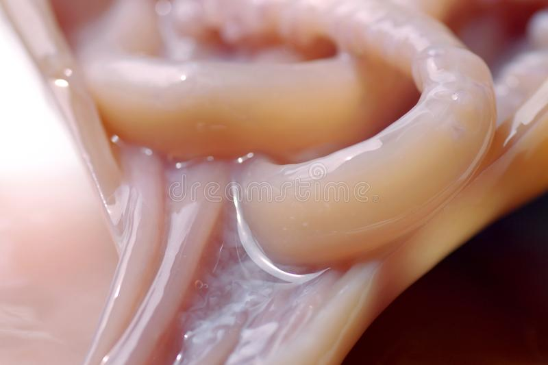 Arms of a squid stock photography