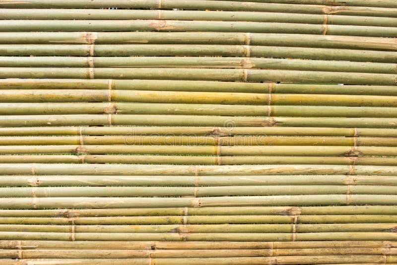 Armure en bambou photographie stock