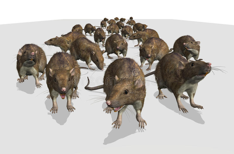 Army of Rats. An army of rats is approaching - I hope the cat is ready! 3D render with digital painting