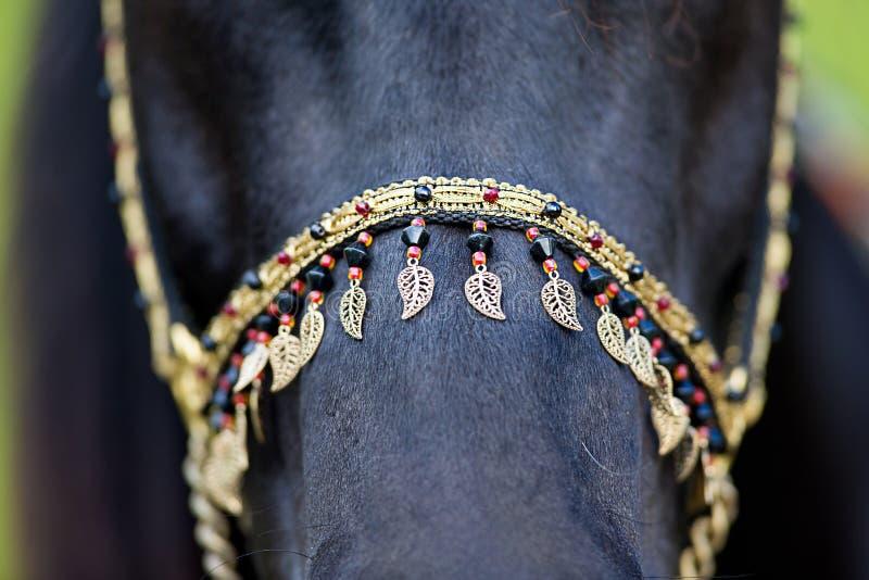 Arnés en caballo negro fotografía de archivo libre de regalías