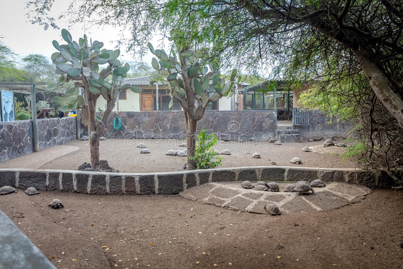 Arnaldo Tupiza Chamaidan, Giant Tortoise Breeding Center, Isabela Island, Galapagos Islands. Ecuador royalty free stock photography