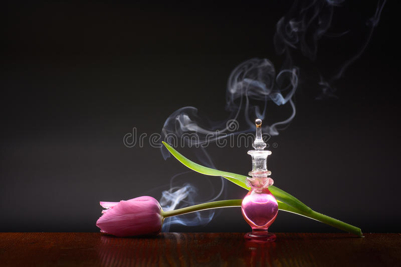 Aroma del tulipán imagen de archivo libre de regalías