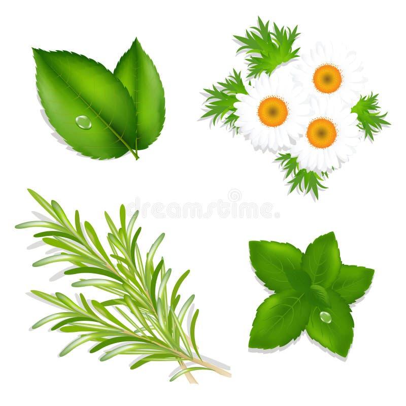 Aroma-Kräuter stock abbildung