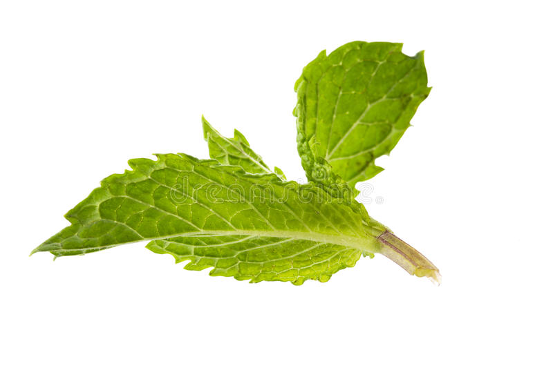 Aroma Mint Leaves Stock Images