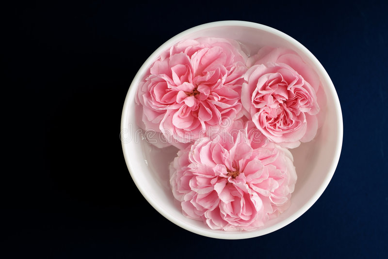 Aroma pink roses royalty free stock images