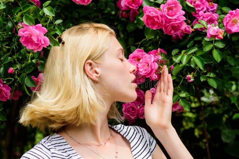 Aroma van rozen Meisjes aanbiddelijke blonde het snuiven geur van roze bloei De lente en de Zomer Parfum en Schoonheidsmiddelen V stock foto