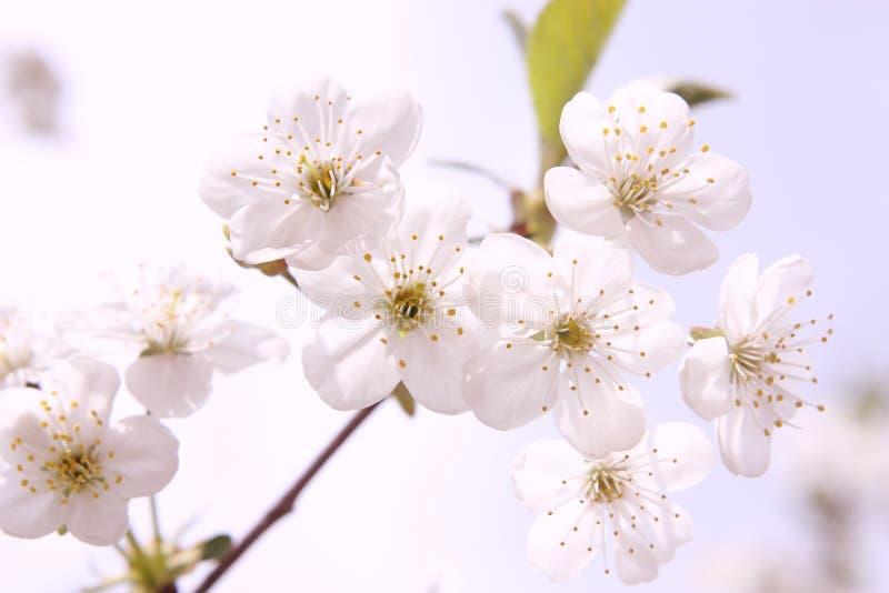 aromatherapy花卉 免版税库存照片