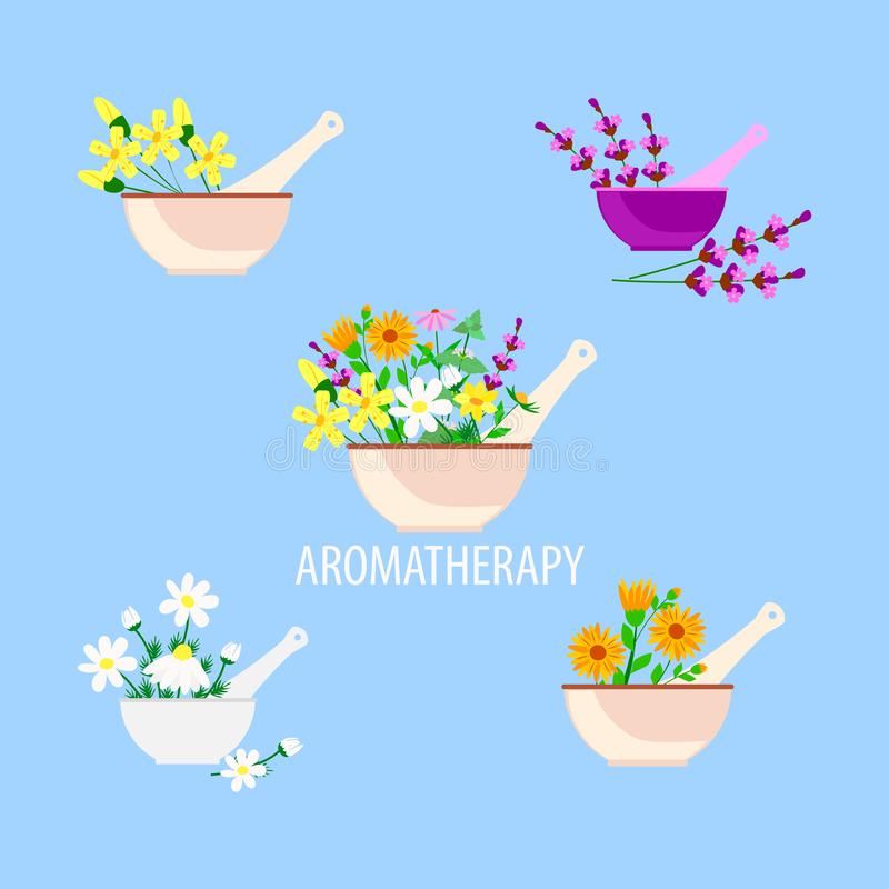 Aromatherapy and alternative natural medicine, lavender herbs and chamomile and calendula in a mortar with pestle. Vector illustration in a flat style royalty free illustration
