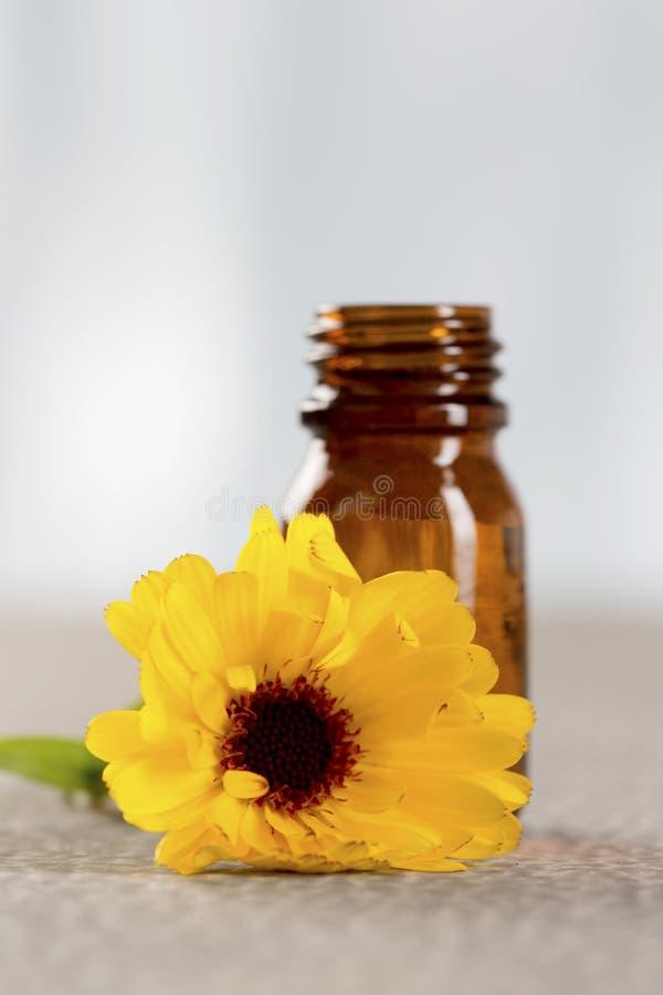 Aromatherapy för växt- medicin - nödvändig olja av ringblomman royaltyfria foton