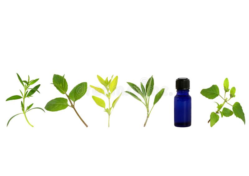 Aromatherapy Herb Leaf Sprigs Stock Photos