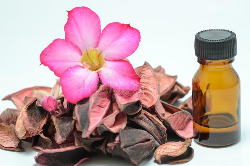 aromatherapy potpourri wzrastał zdjęcia royalty free