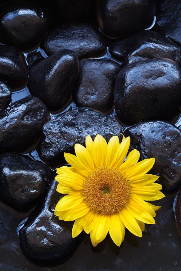 aromatherapy słonecznik obraz royalty free