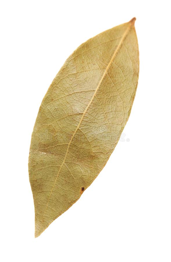 Aromatic bay leaves royalty free stock photos