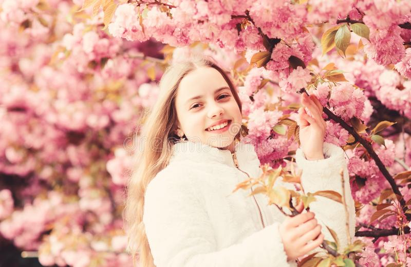 Aromatic blossom concept. Girl tourist posing near sakura. Child on pink flowers of sakura tree background. Girl stock images