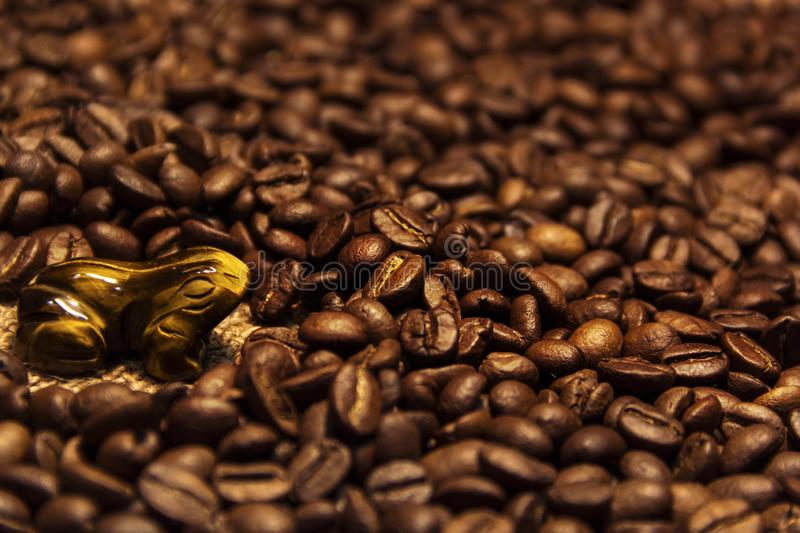 Aromatic coffee beans excellent drink in the morning stock image